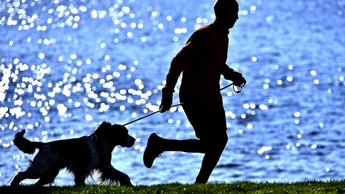 Är joggning med hunden det bästa? Foto Anders Wiklund/TT