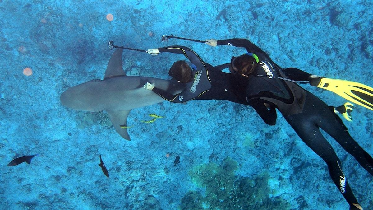 Två personer med selfiepinnar fridyker och håller en hajs fena.