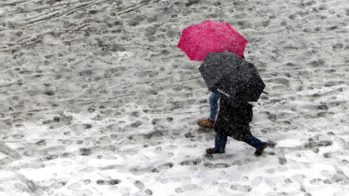 Snöslask, promenad, paraplyer