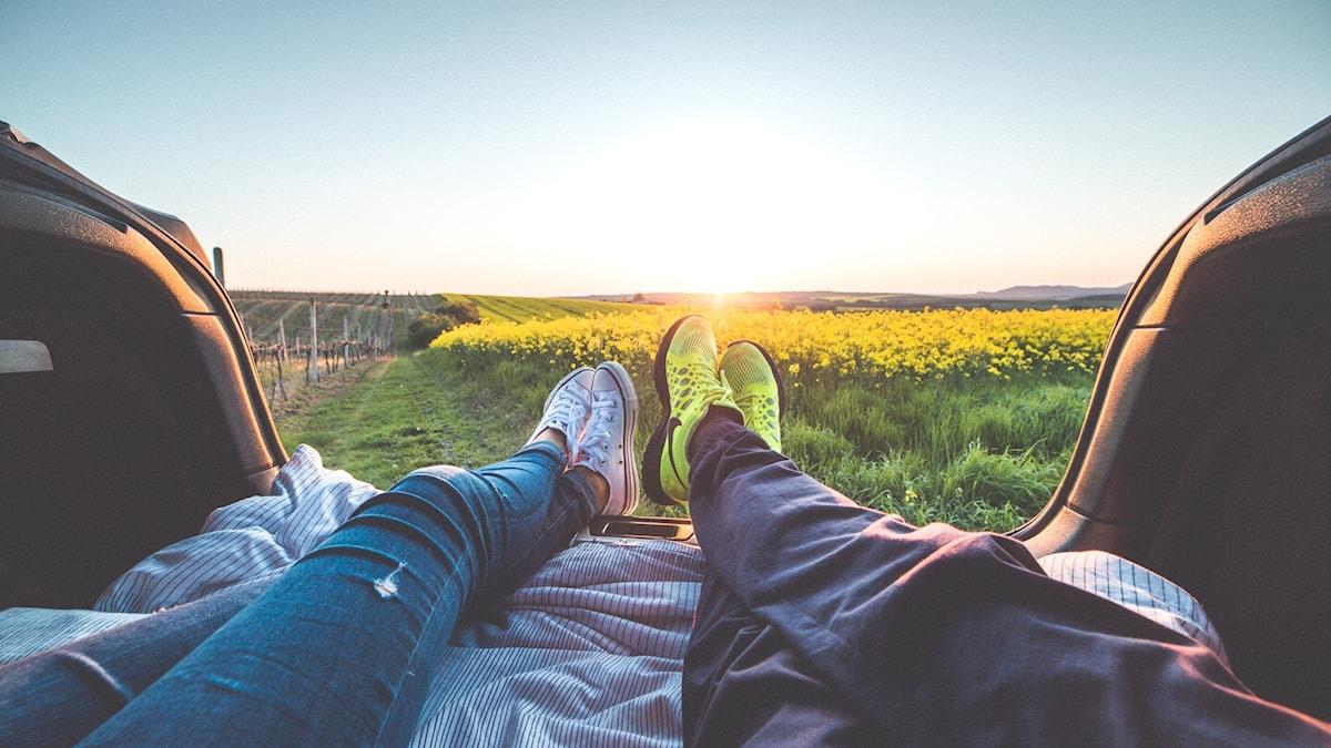 Rapsfält, solnedgång, par i bil.