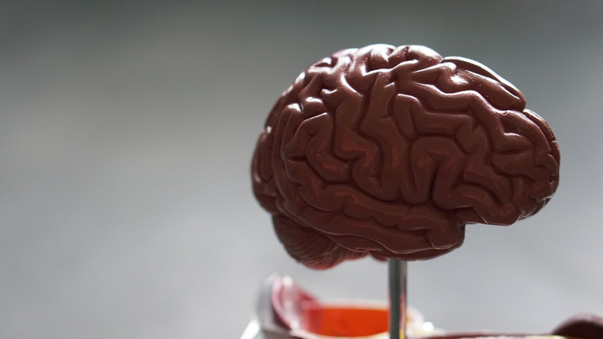 Bild på en hjärna.