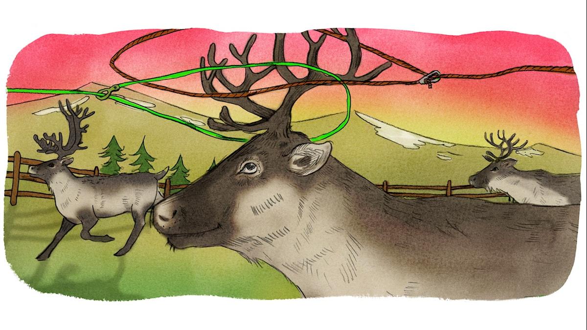 Magiska Skrinet: Gammellassot och plastlassot, illustration: Ingrid Flygare