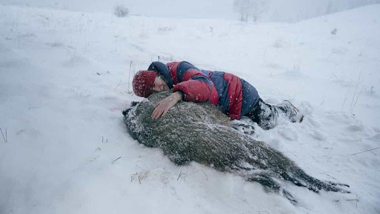 Agnieszka Mandat-Grabka spelar Duszejko som här sörjer ett dödat djur i filmen Villebråd. Foto: NonStop Entertainment.