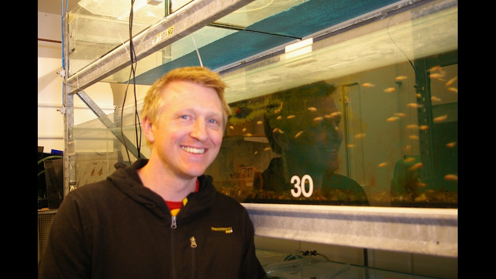 Albin Gräns, zoofysiolog som forskar vid SLU o Göteborgs universitet. Foto: Björn Gunér/Sveriges Radio