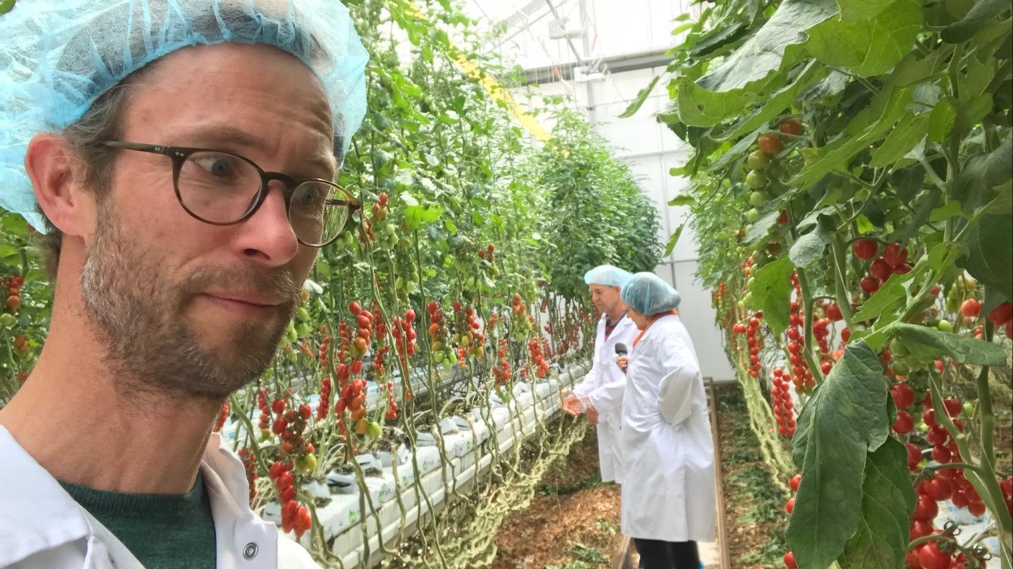 Programledaren Björn Gunér står i förgrunden i ett växthus med skyddsmössa och vit rock och tittar på röda tomater som växer. I bakgrunden två personer till i liknande kläder.