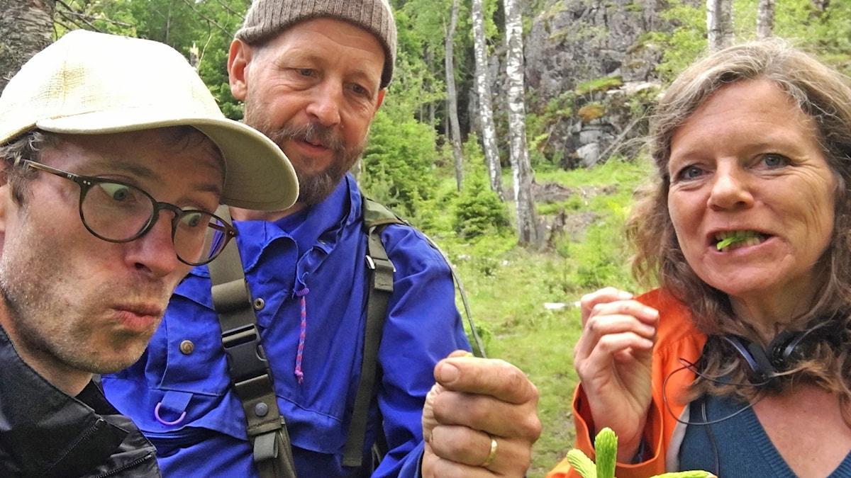 Björn och Lena tuggar på löv med Stefan Rickmer i skogen