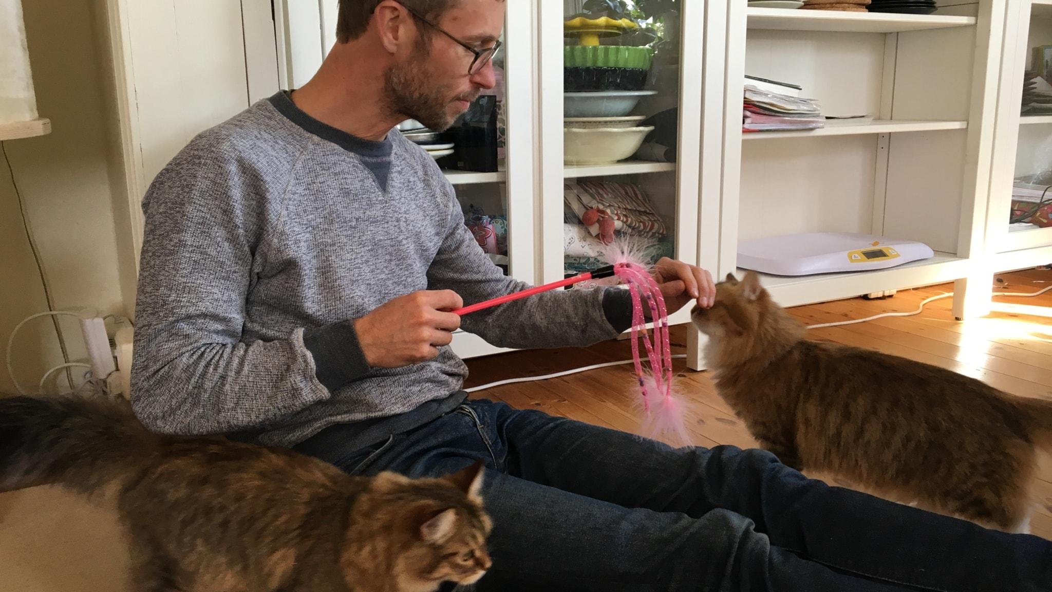 Björn Gunér sitter och leker med en katt med en kattleksak och en annan katt går framför.