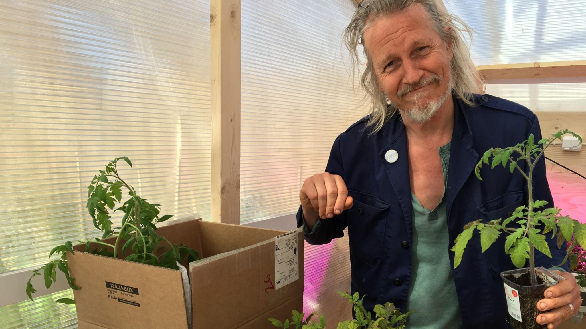 Stefan sundström med en tomatplanta i handen och en i kartong