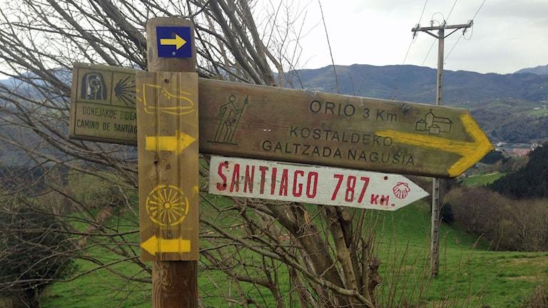 Flera skyltar på pilgrimsvandringen