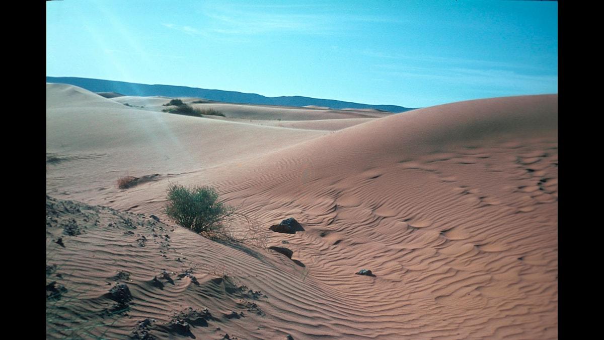 Öken i Marocko Foto: Ca Peterson/SVT Bild