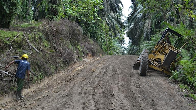 Vägar till plantagerna öppnar upp ny regnskog för bosättning och skövling. Foto: Marcus Hansson / Sveriges Radio