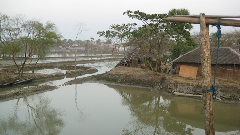 Bangladesh ligger i ett läge utsatt för översvämningar. Foto: Margita Boström/SR.