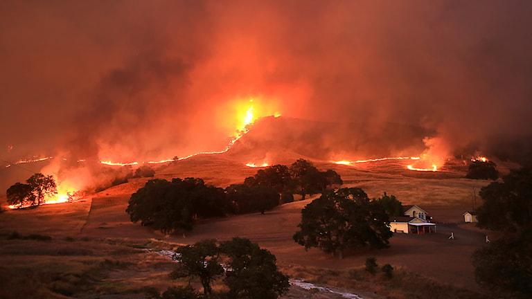 Torkan i Kalifornien beskrivs som historisk med bland annat svårbekämpade bränder som följd. Foto: Kent Porter/TT