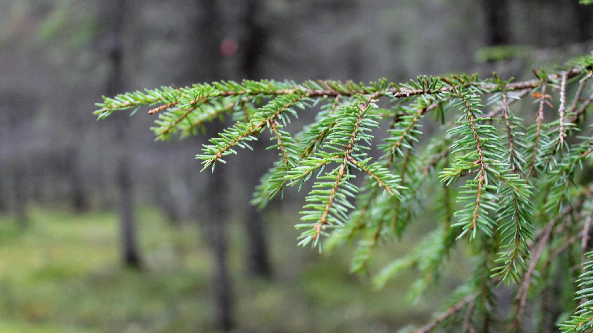 Svårt få skogen att räcka till allt biobränsle