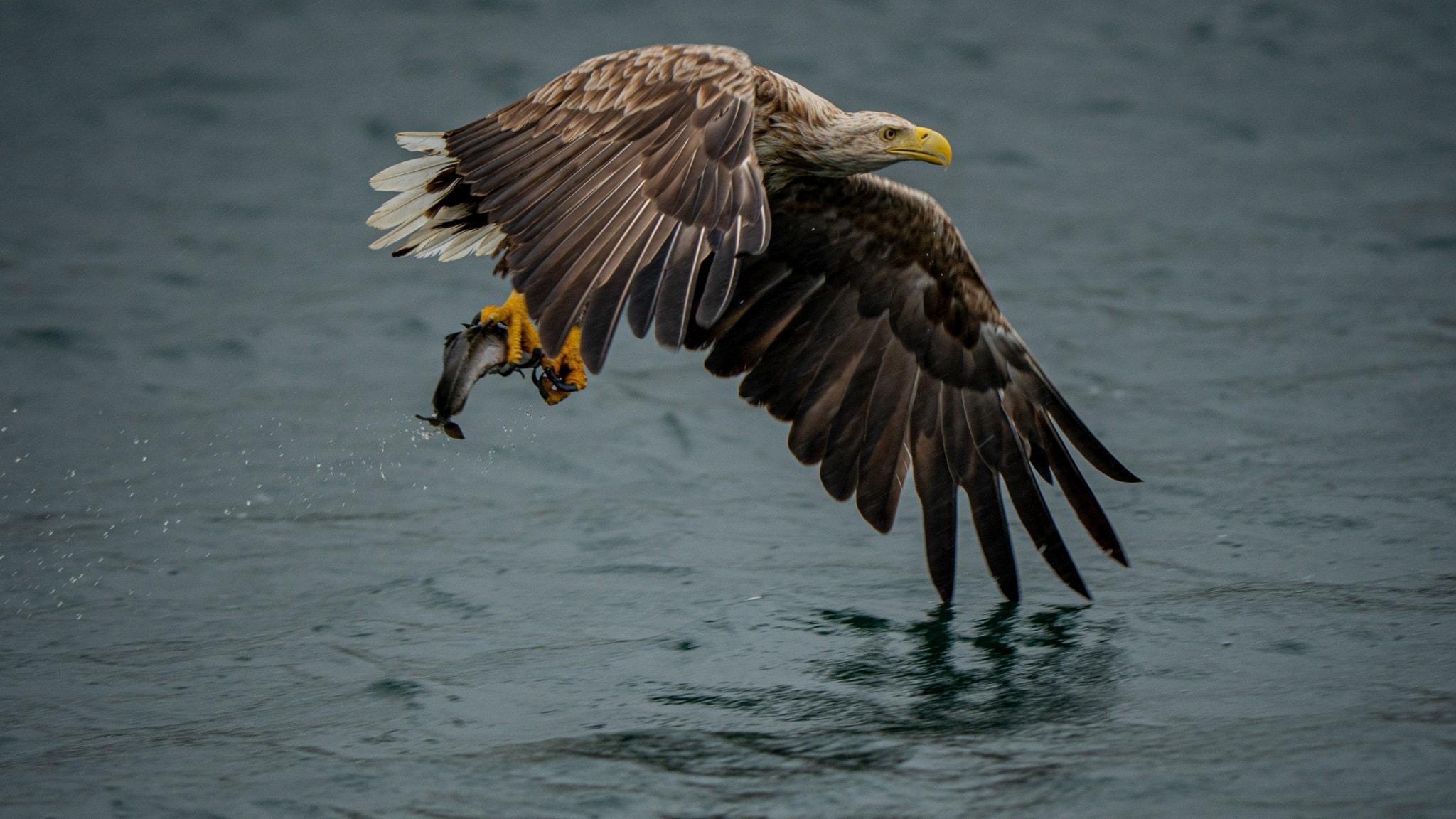 Skräckens landskap hot för sjöfåglar