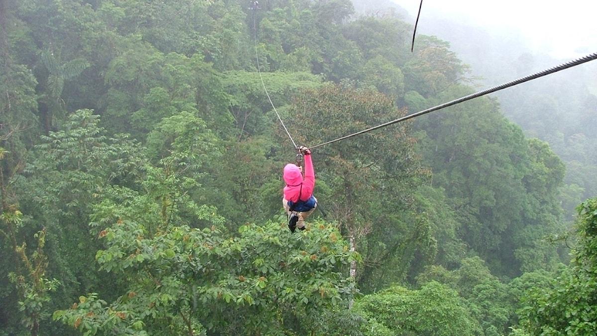 En kvinna i rosa jacka hänger i en linbana över en grön, dimhöljd regnskog