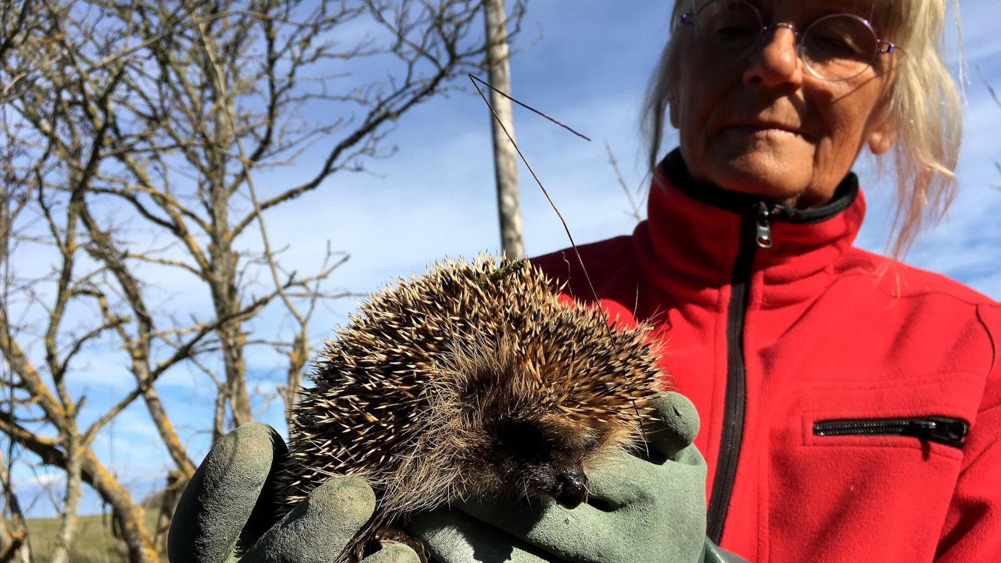 Fler hotade arter på årets rödlista - spela