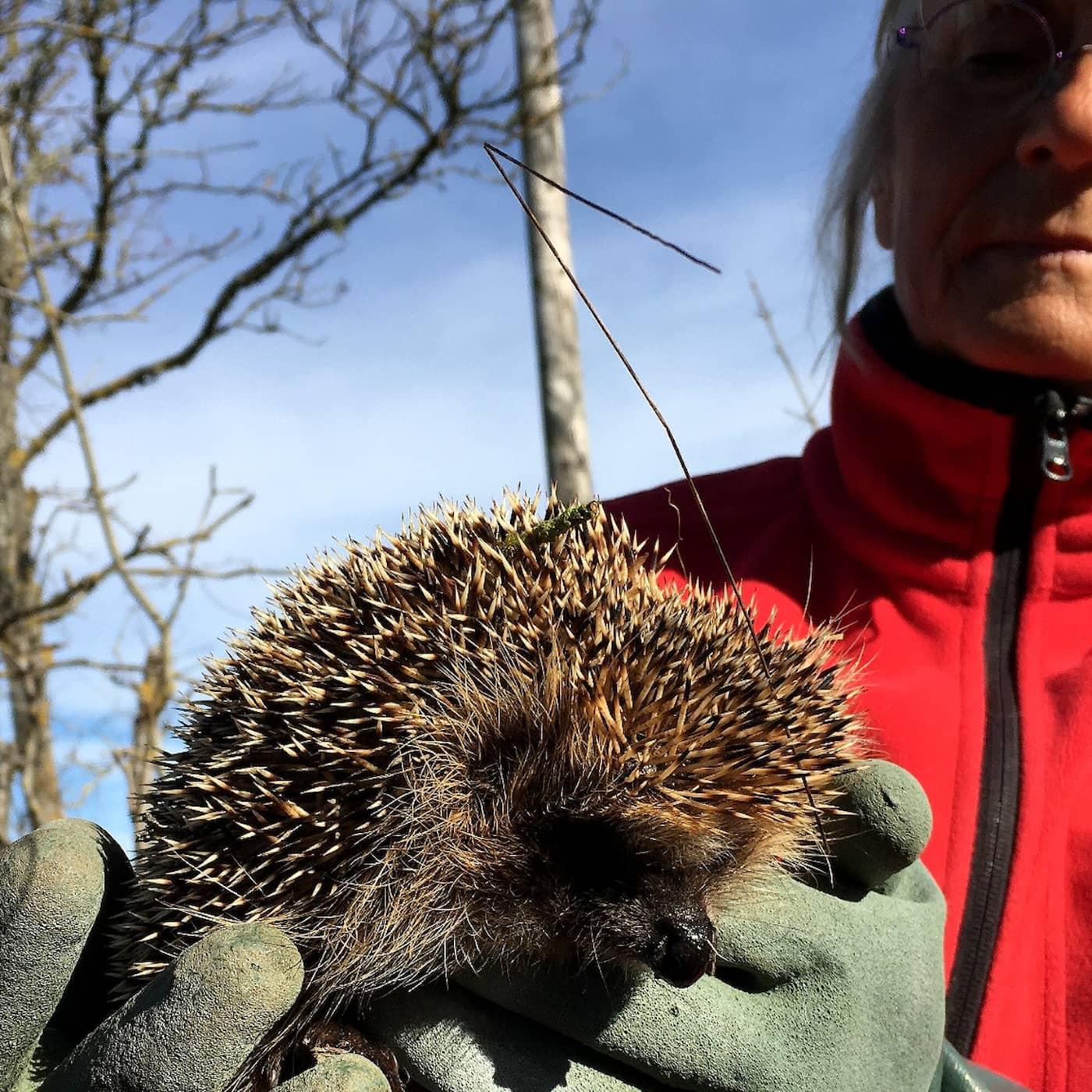 Fler hotade arter på årets rödlista