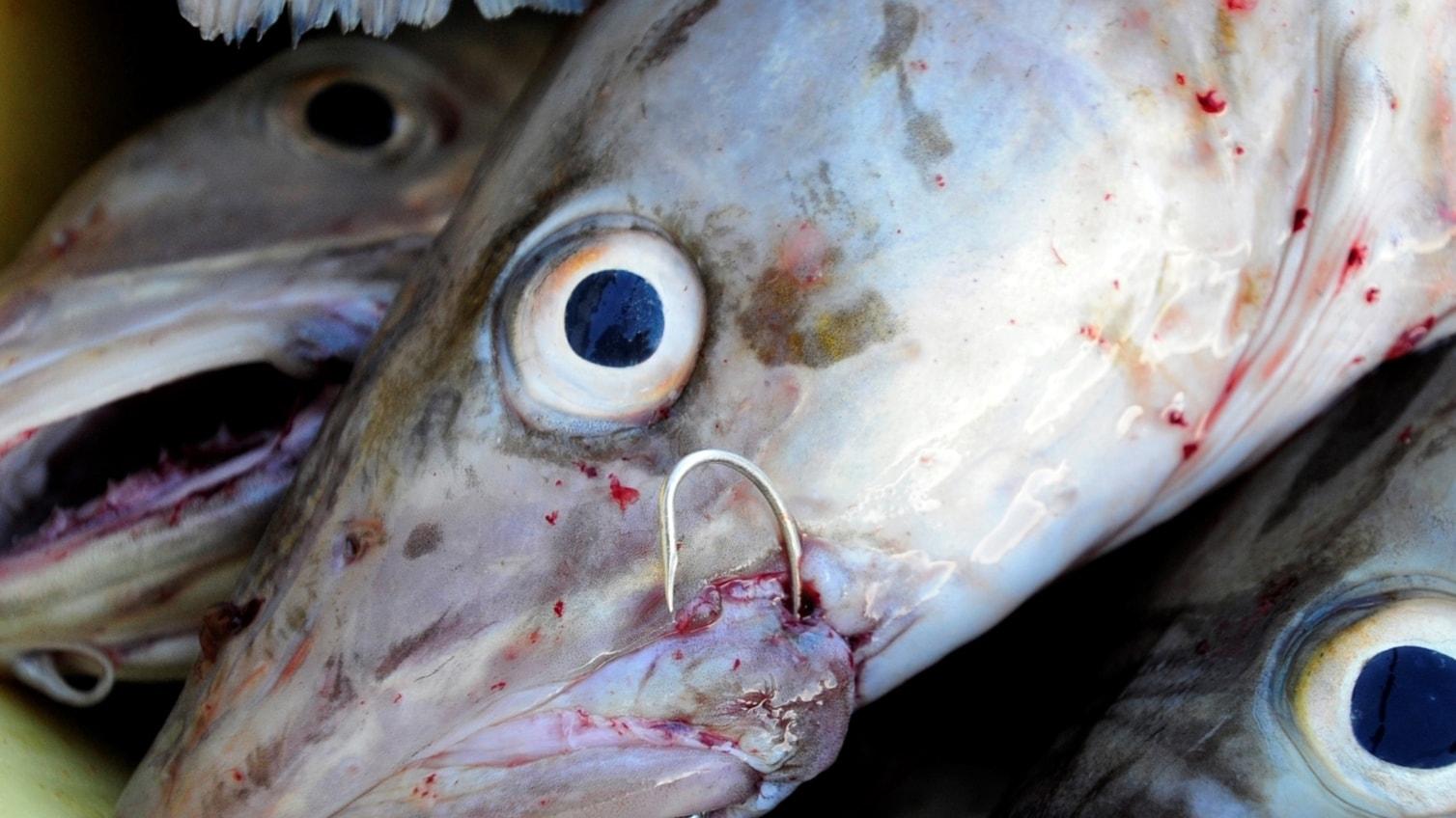 Hur mår fiskarna i Östersjön? (R)