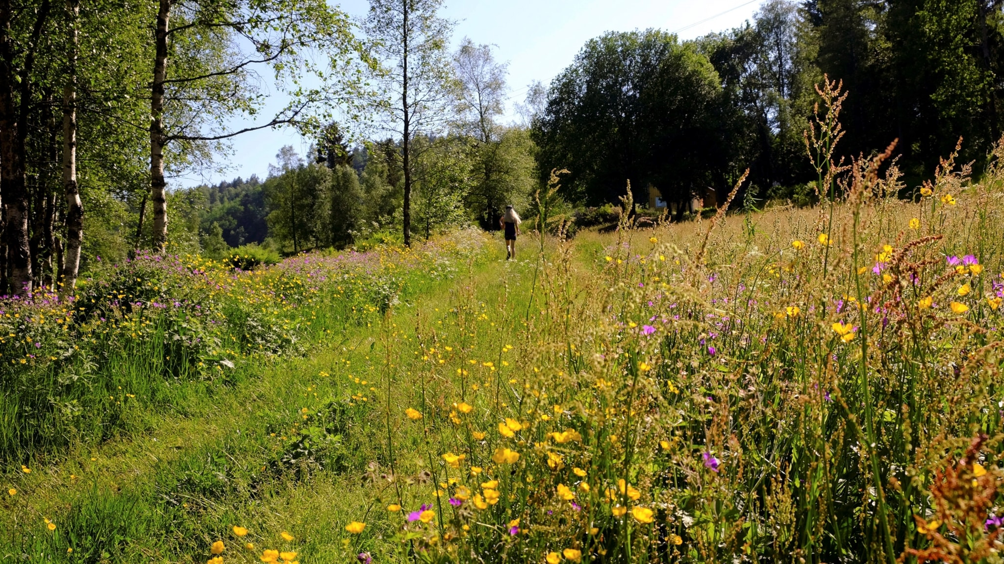 Grön sommar med Klotet