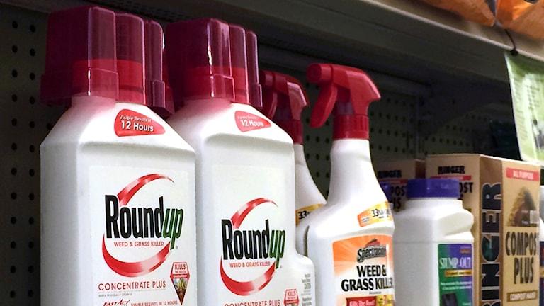 Vita flaskor på en affärskylla med texten Roundup i rött