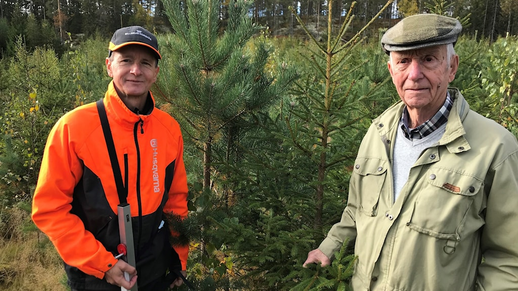 Två män står i förgrunden i en gles skog med späda träd: tall, gran och lövträd. Mannen till vänster har arbetskläder på.