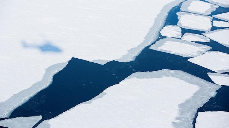 Isflak på havsytan