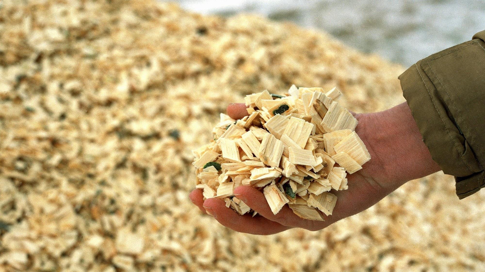 Klimatnyttan med biobränslen ifrågasätts