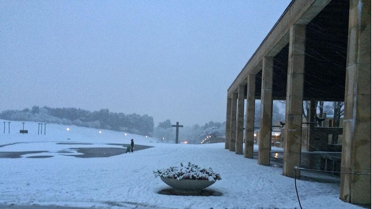 Finns den smärtfria döden? Skogskyrkogården i Stockholm, Foto: Åsa Furuhagen/SR