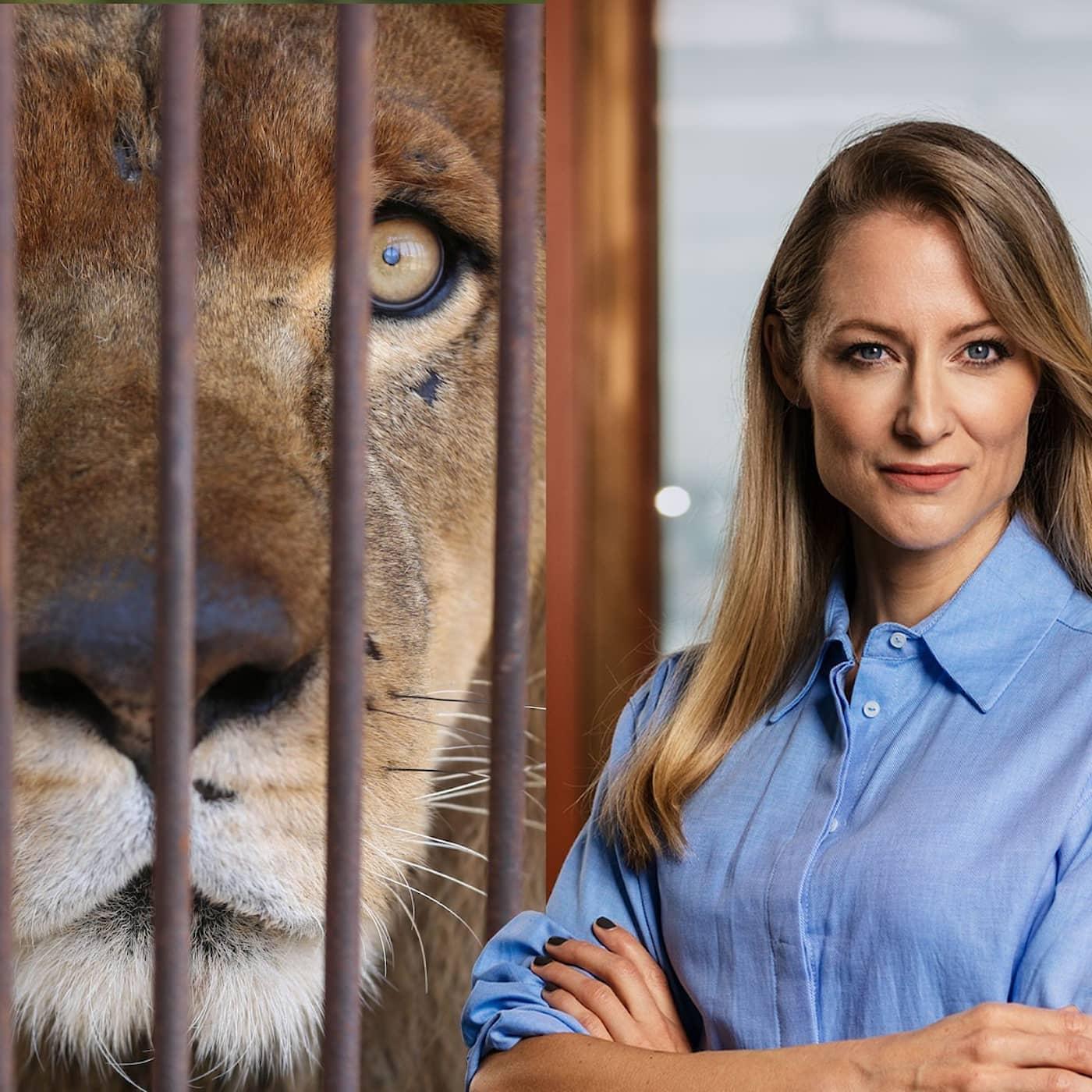 Tvärstopp för sargade lejon