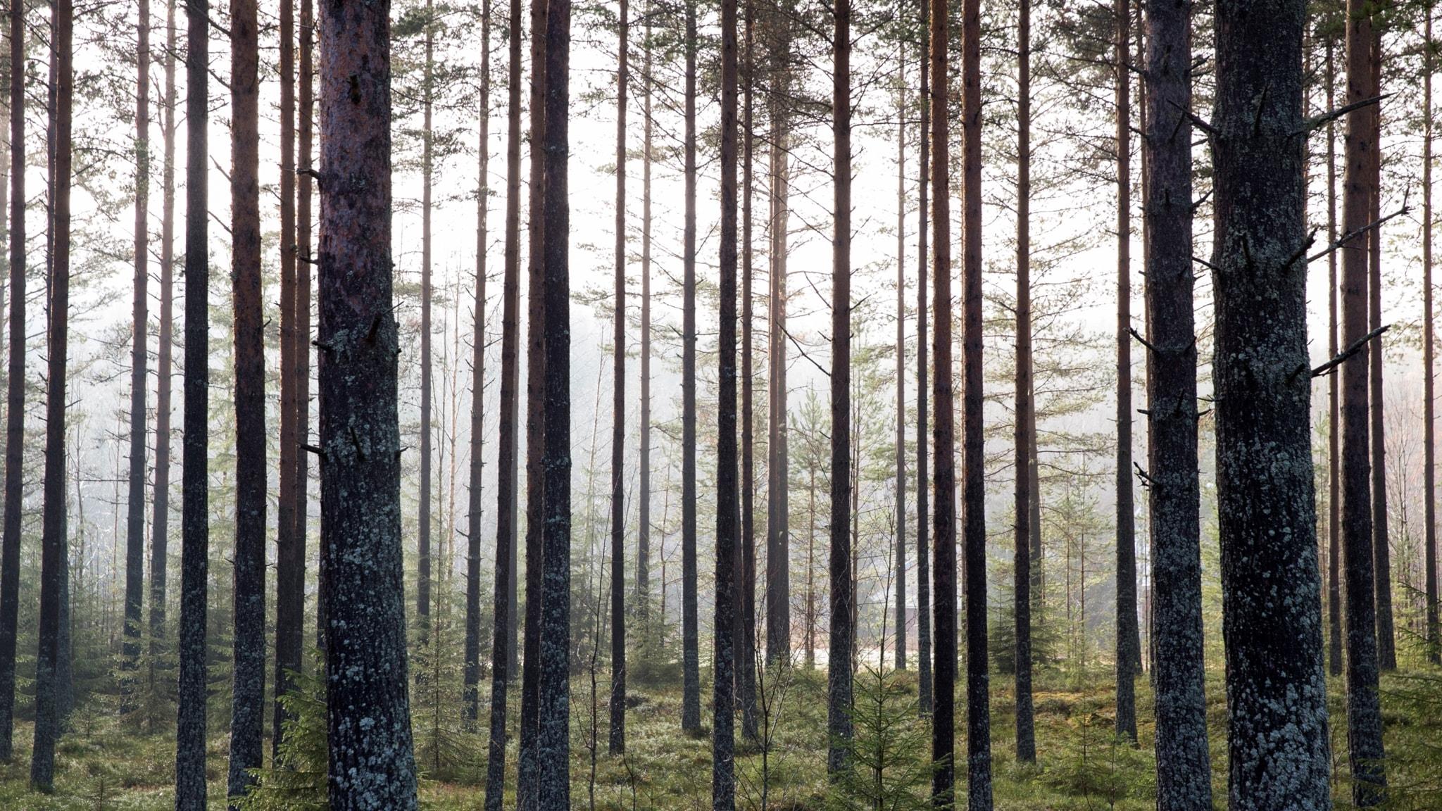 Skogsindustrin boomar: