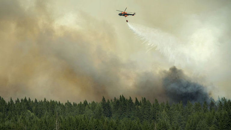The fires devastated thousands of hectares of forest. Photo: Fredrik Sandberg / TT