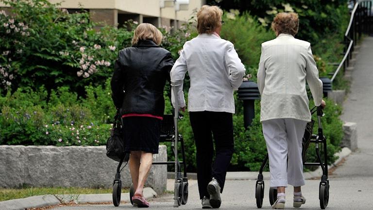 Tre äldre kvinnor bakifrån.  Foto: Hasse Holmberg / TT
