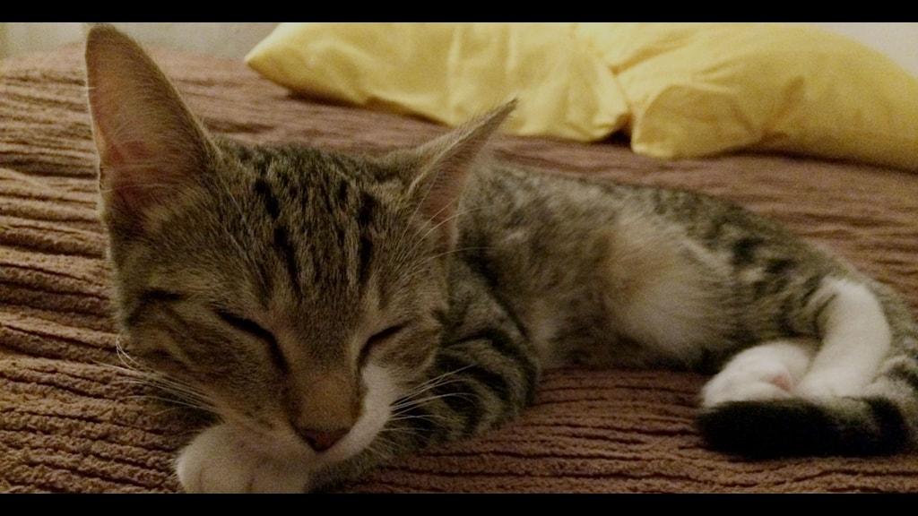 Katt – faktiskt inte det största klickdragplåstret. Foto: Rebecka Ljung/SR