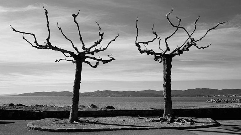 Träd Foto: Thomas Leth-Olsen/Flickr