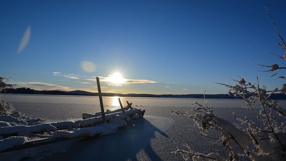 Fjällvidder. Foto: Rasmus, privat