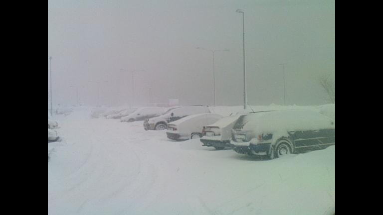 Klimatfrågan är iskall. Bild: SVT Bild