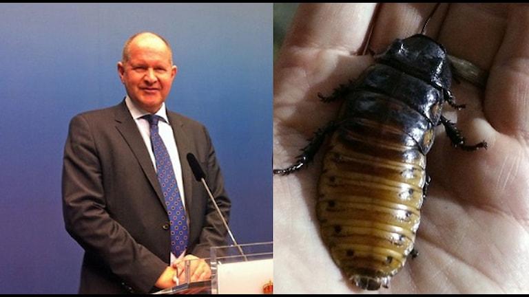 Dan Eliasson och en kackerlacka