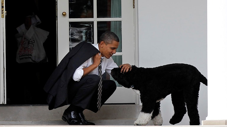 Obama klappar sin hund.