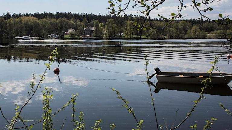 Bild på svensk natur