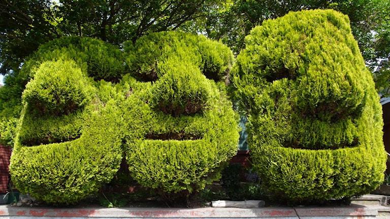 Nättrollen lurar ständigt i buskarna. Kanske är du själv trollet?