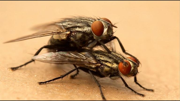 Flugsex Foto Motleypixl från Flickr