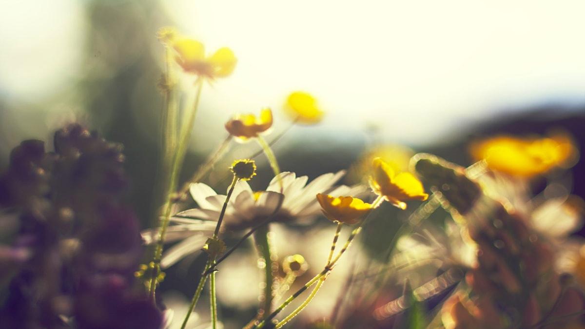 Sommar. Foto: Jungho Kim/flickr/CC BY-NC-ND 2.0