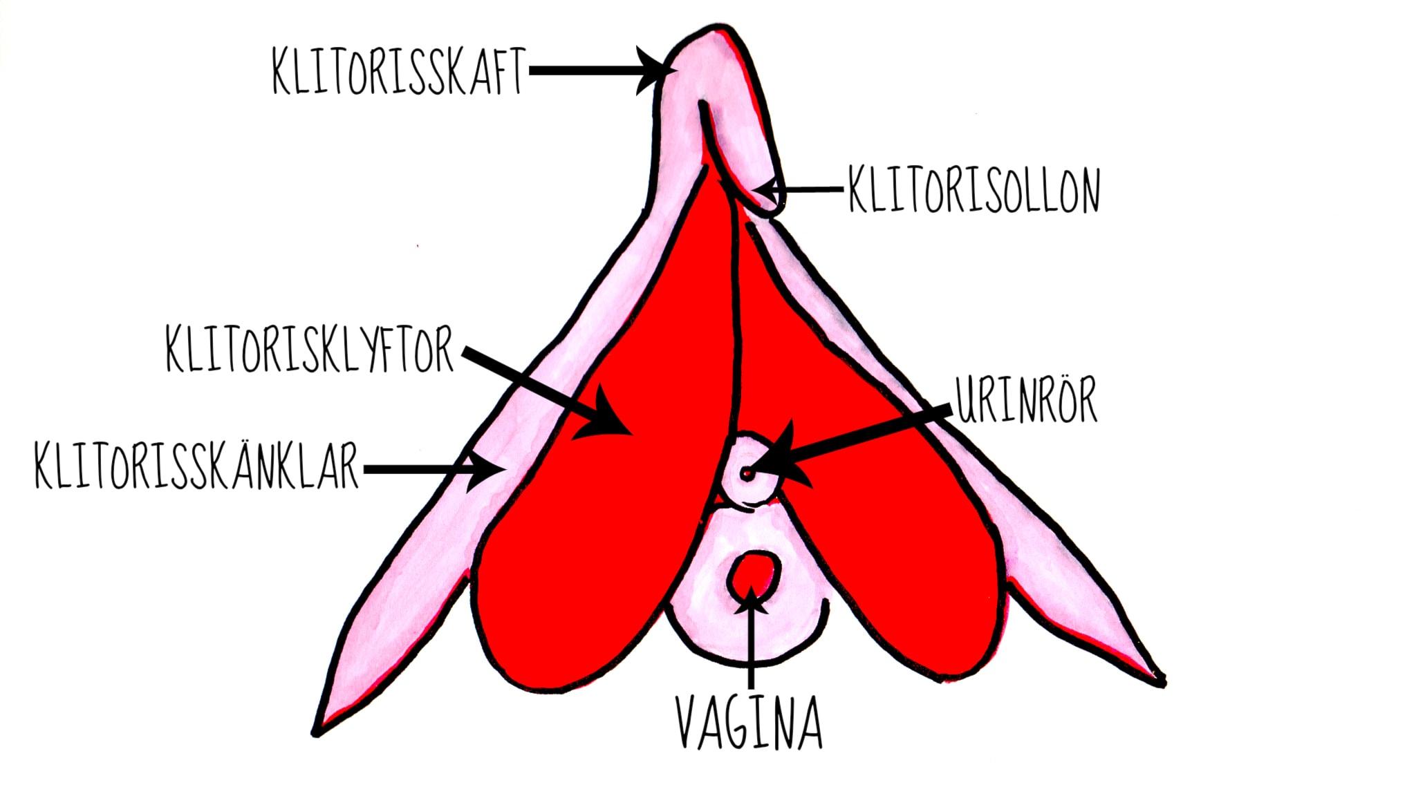 fitta bilder frГҐn bak sidan feministisk porr Tube