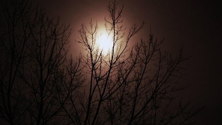 Fullmåne bakom träd