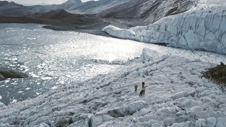 Smältande glaciär