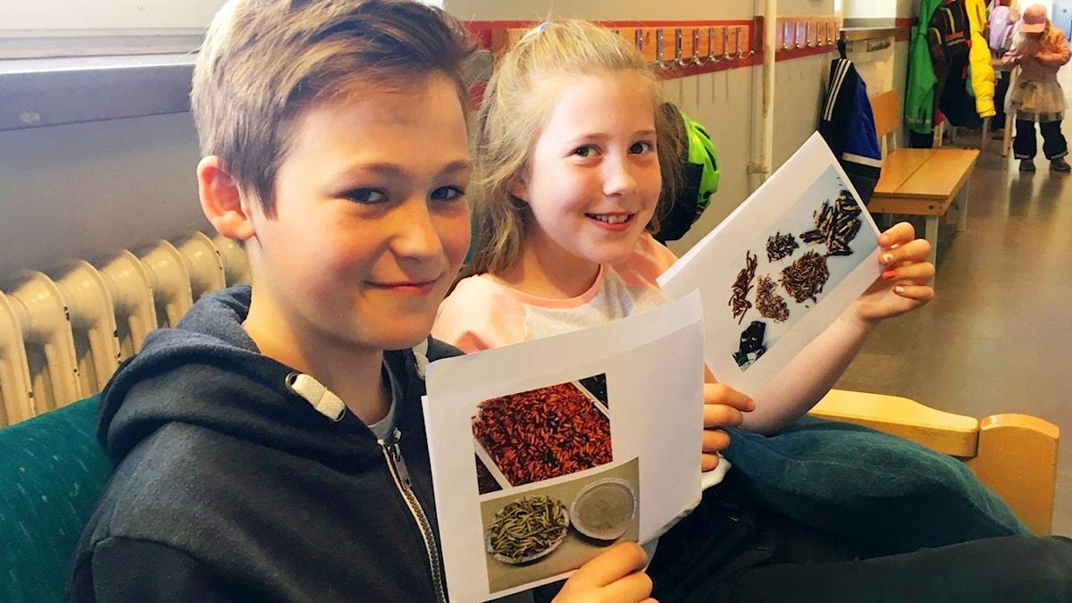 Ludvig Jonsson och Hedda Waldenström visar upp bilder på insekter. De sitter i en skolkorridor.