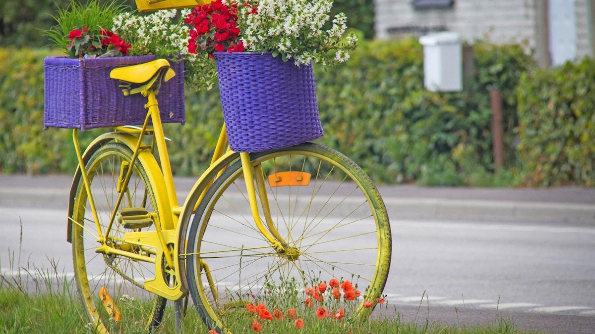 Polkupyörä, joka on koristeltu kukkaruukuilla