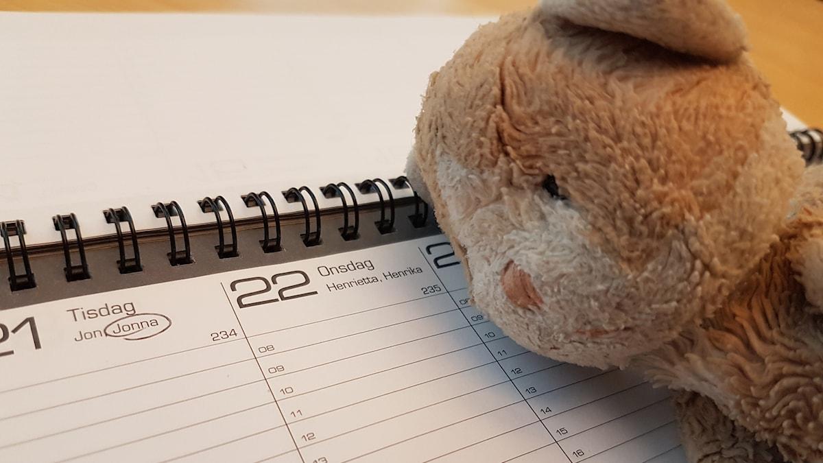 Kissa ja kalenteri