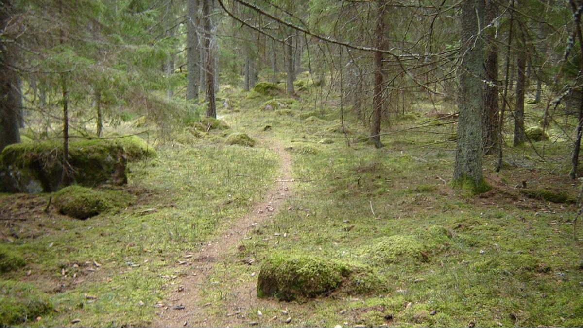Minne polku vie? Foto: Tuomo Rouhiainen